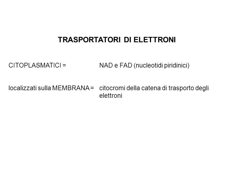 TRASPORTATORI DI ELETTRONI