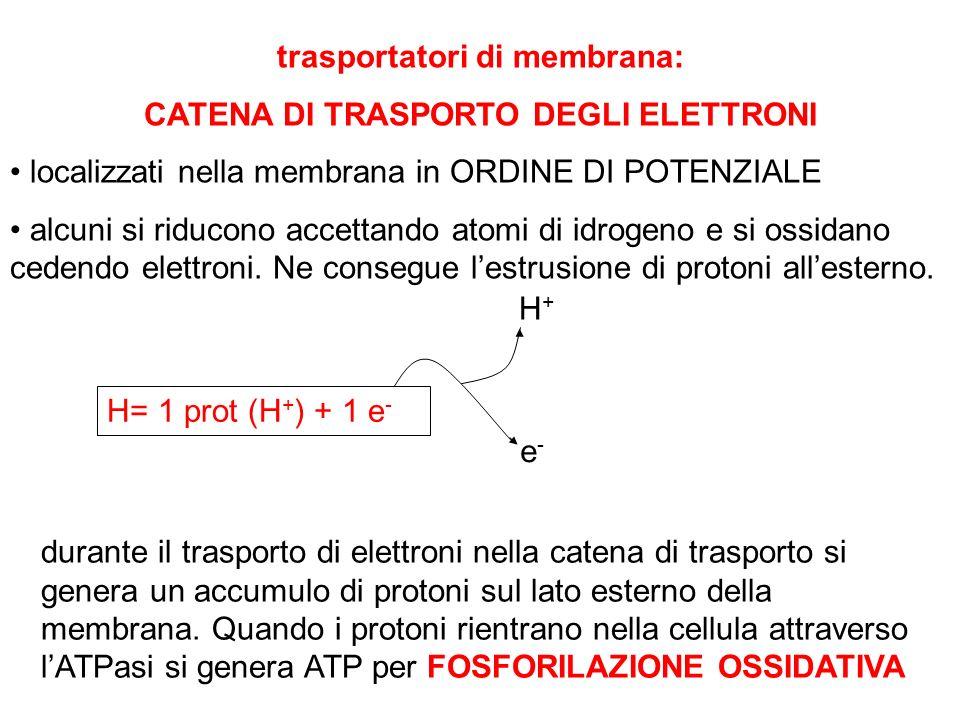 trasportatori di membrana: