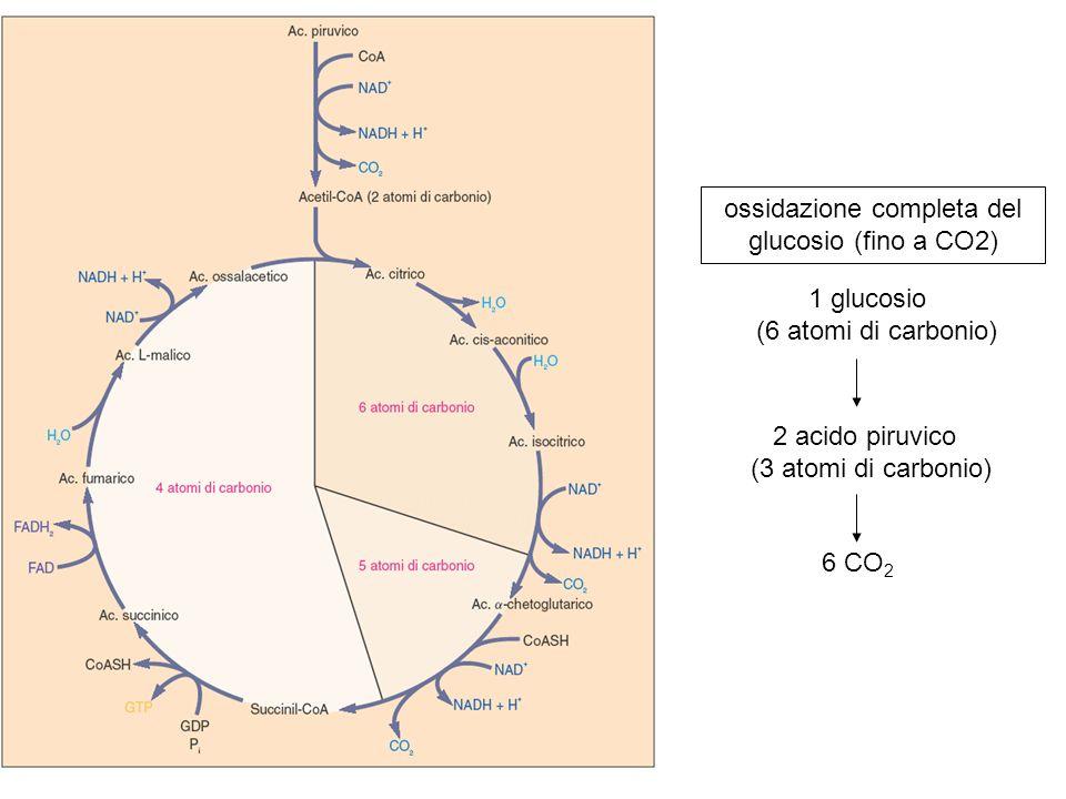 ossidazione completa del glucosio (fino a CO2)