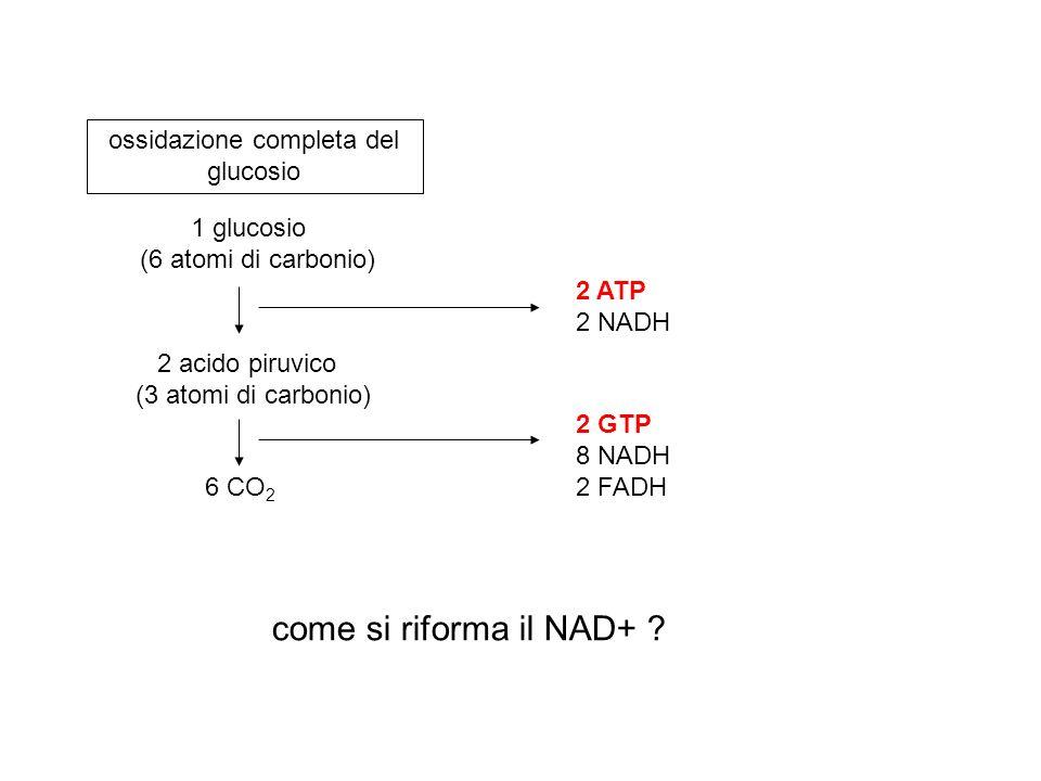 ossidazione completa del glucosio