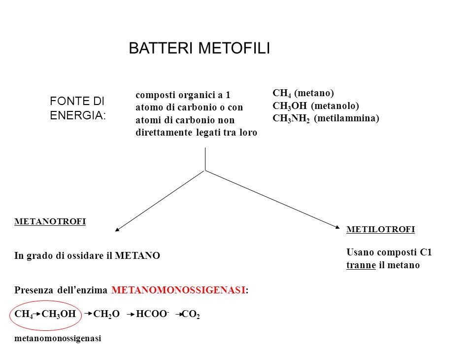 BATTERI METOFILI FONTE DI ENERGIA: CH4 (metano)