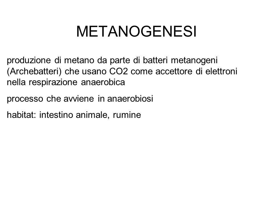 METANOGENESI