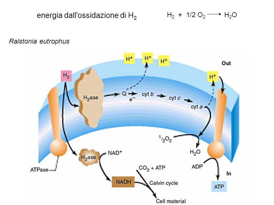 energia dall ossidazione di H2