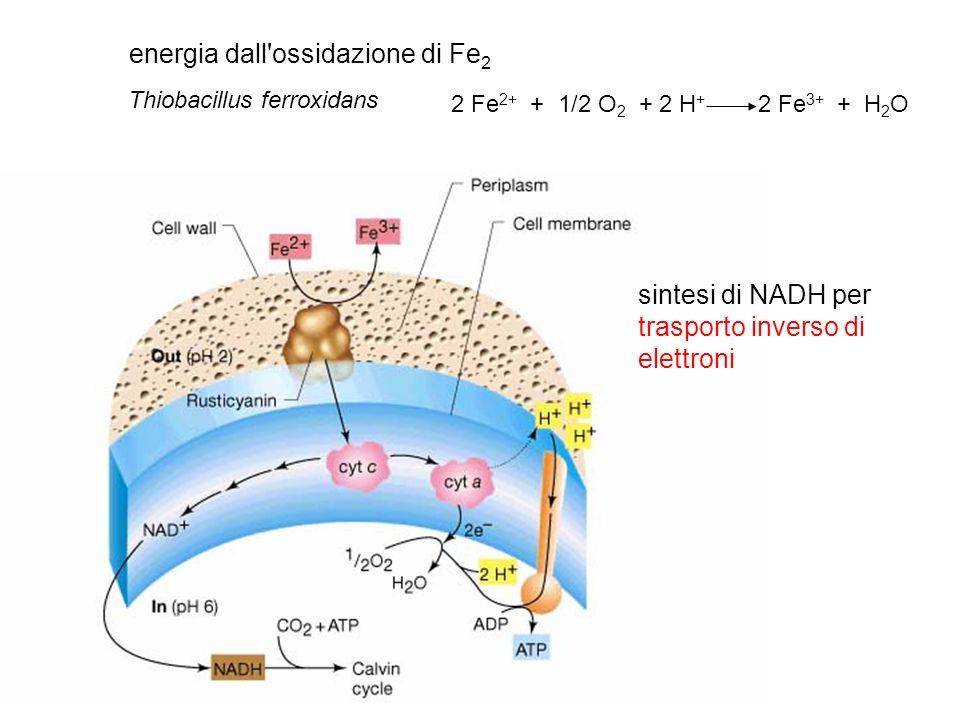 energia dall ossidazione di Fe2