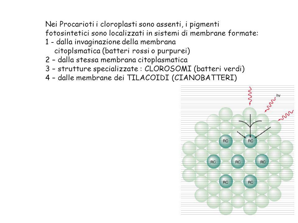 Nei Procarioti i cloroplasti sono assenti, i pigmenti fotosintetici sono localizzati in sistemi di membrane formate: