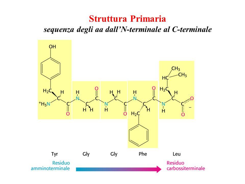 sequenza degli aa dall'N-terminale al C-terminale