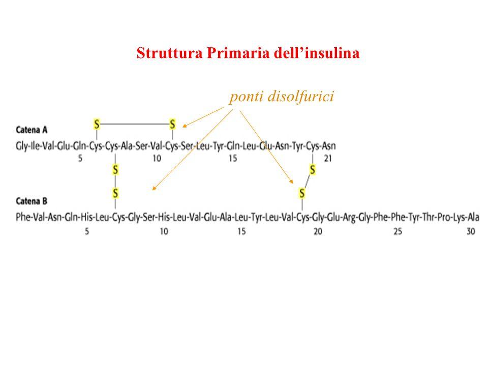 Struttura Primaria dell'insulina