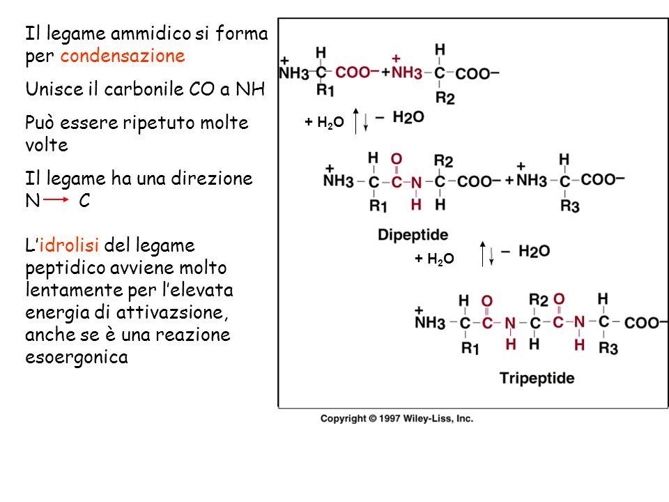 Il legame ammidico si forma per condensazione