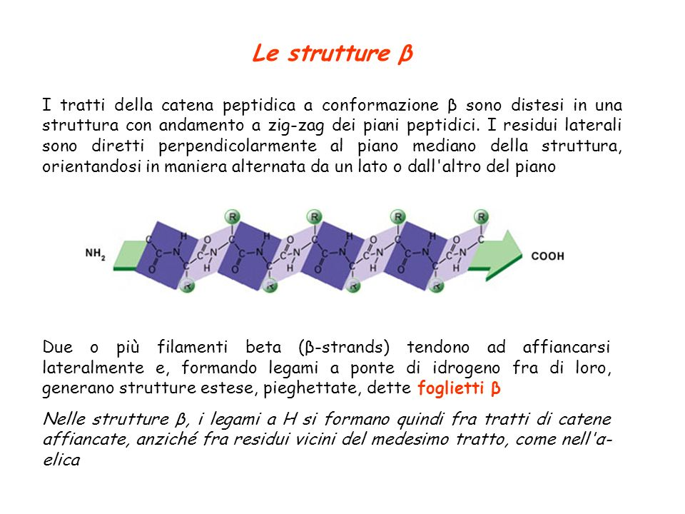 Le strutture β