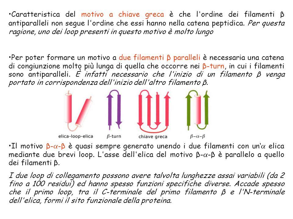 Caratteristica del motivo a chiave greca è che l ordine dei filamenti β antiparalleli non segue l ordine che essi hanno nella catena peptidica. Per questa ragione, uno dei loop presenti in questo motivo è molto lungo