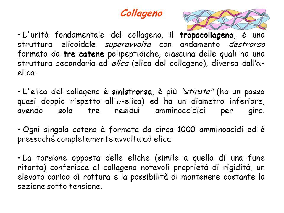 Collageno