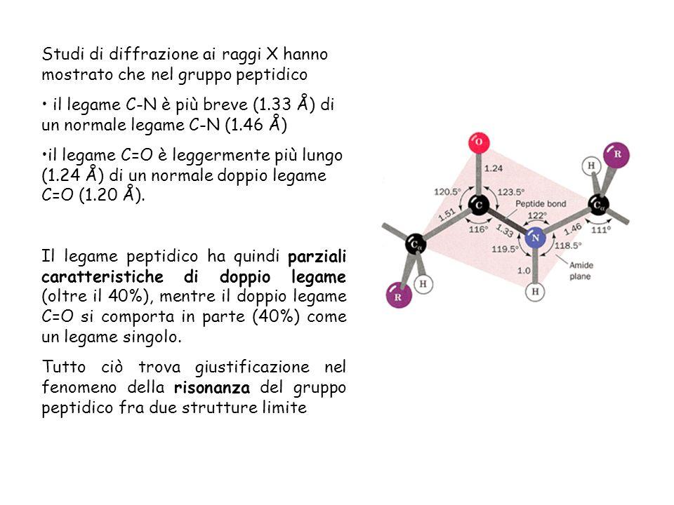Studi di diffrazione ai raggi X hanno mostrato che nel gruppo peptidico