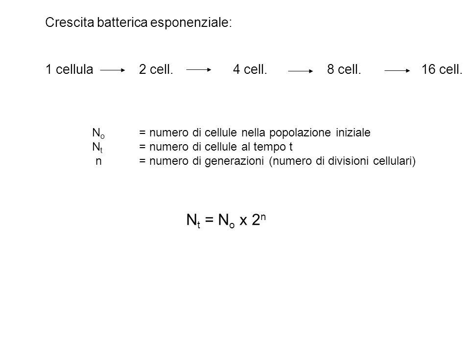 Crescita batterica esponenziale: