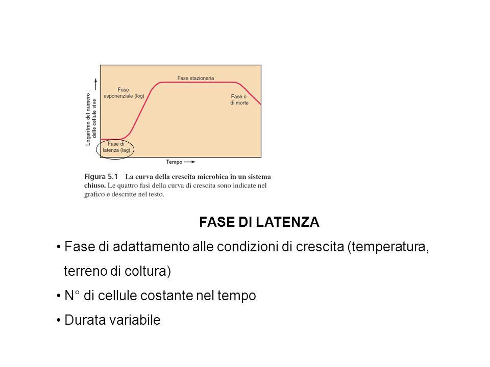 FASE DI LATENZA Fase di adattamento alle condizioni di crescita (temperatura, terreno di coltura) N° di cellule costante nel tempo.