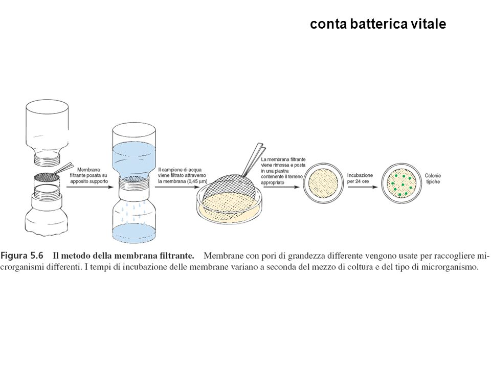 conta batterica vitale