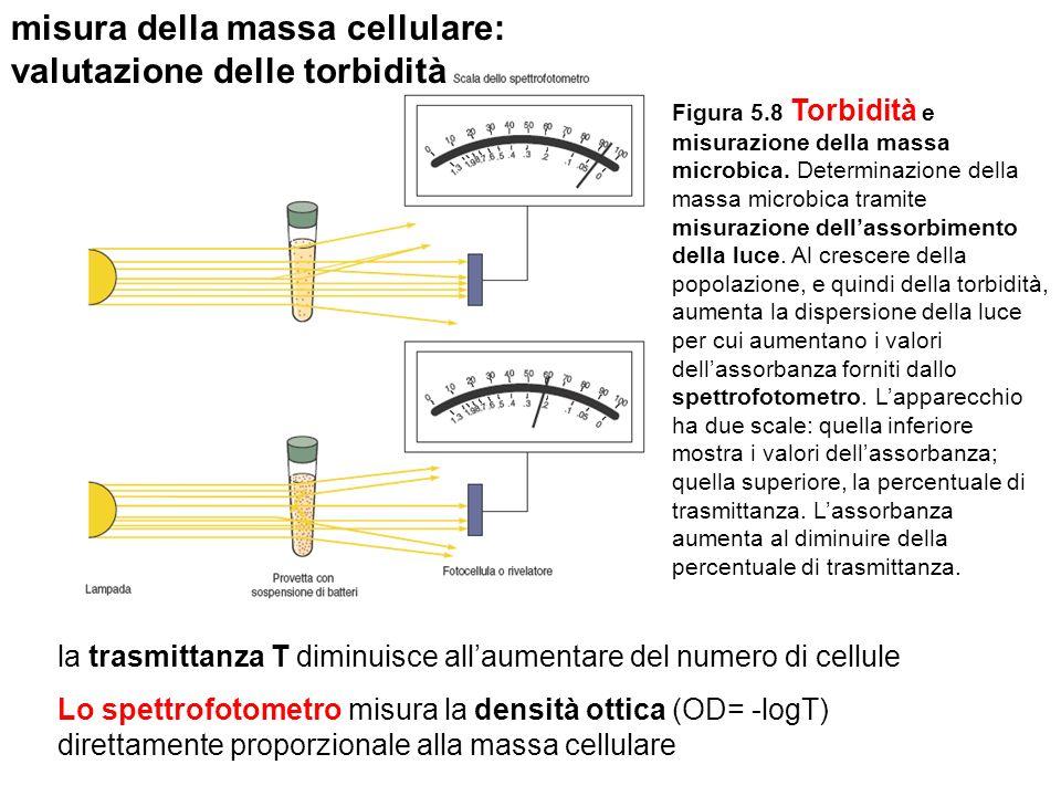 misura della massa cellulare: valutazione delle torbidità