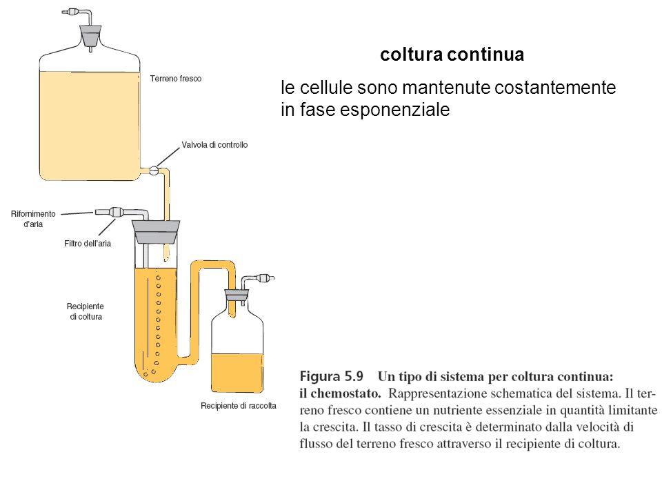 coltura continua le cellule sono mantenute costantemente in fase esponenziale