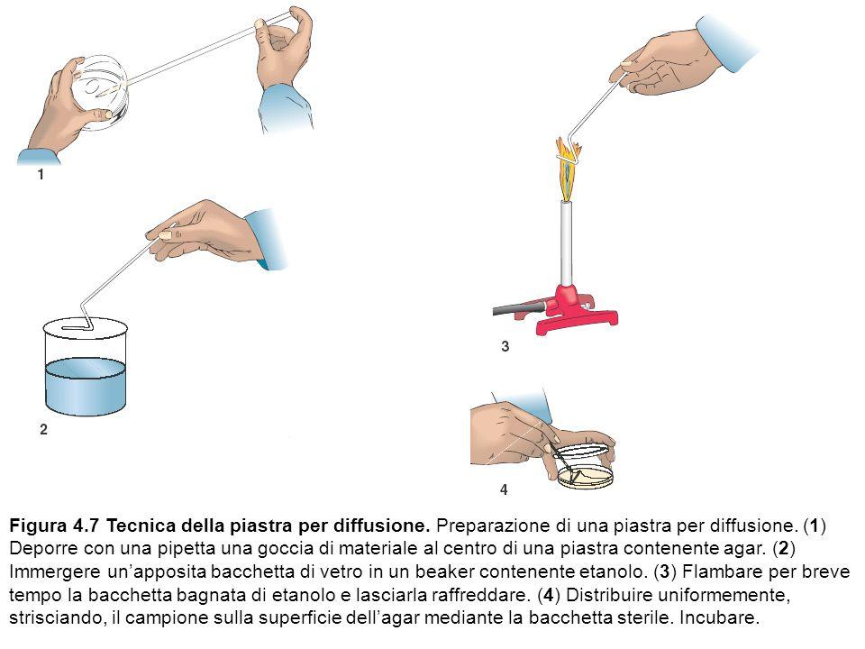 Figura 4. 7 Tecnica della piastra per diffusione