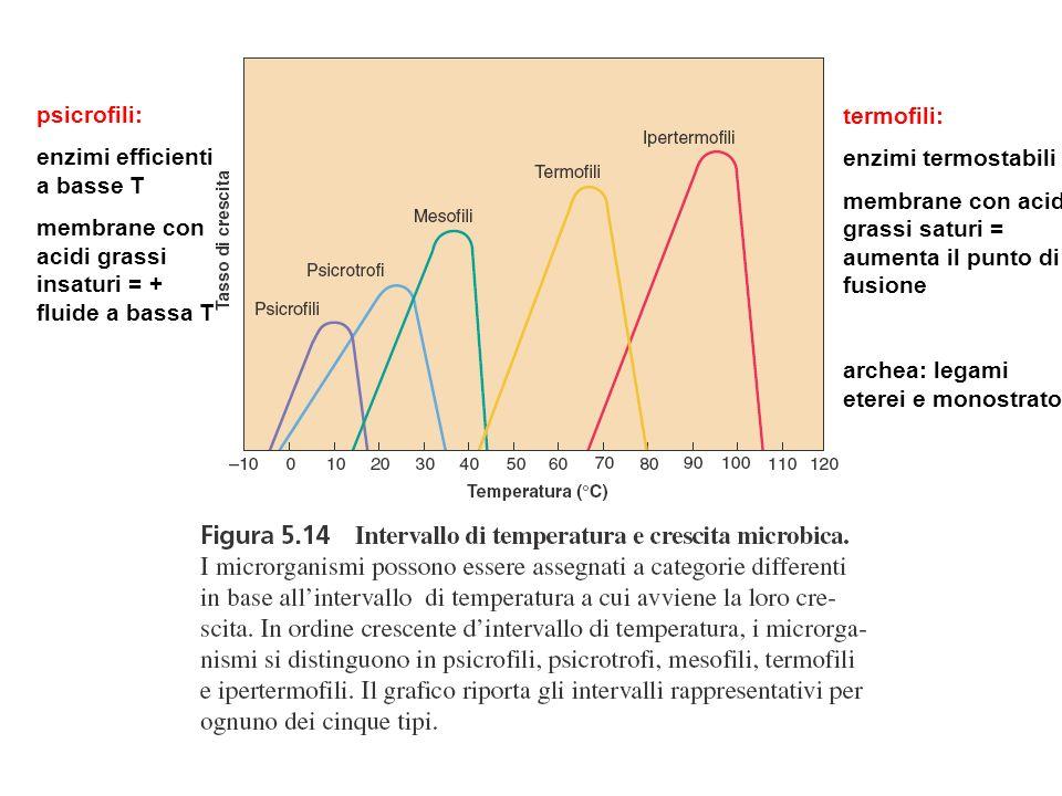 psicrofili: enzimi efficienti a basse T. membrane con acidi grassi insaturi = + fluide a bassa T. termofili: