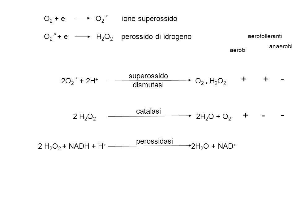 + - O2 + e- O2-* ione superossido O2-* + e- H2O2 perossido di idrogeno