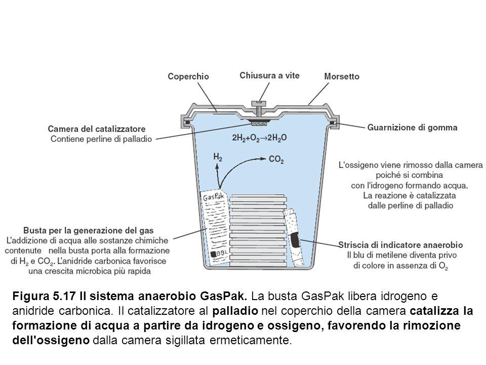 Figura 5. 17 Il sistema anaerobio GasPak