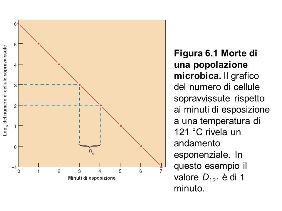 Figura 6. 1 Morte di una popolazione microbica