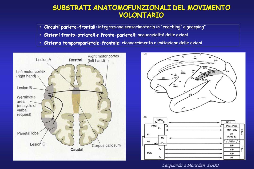 SUBSTRATI ANATOMOFUNZIONALI DEL MOVIMENTO VOLONTARIO