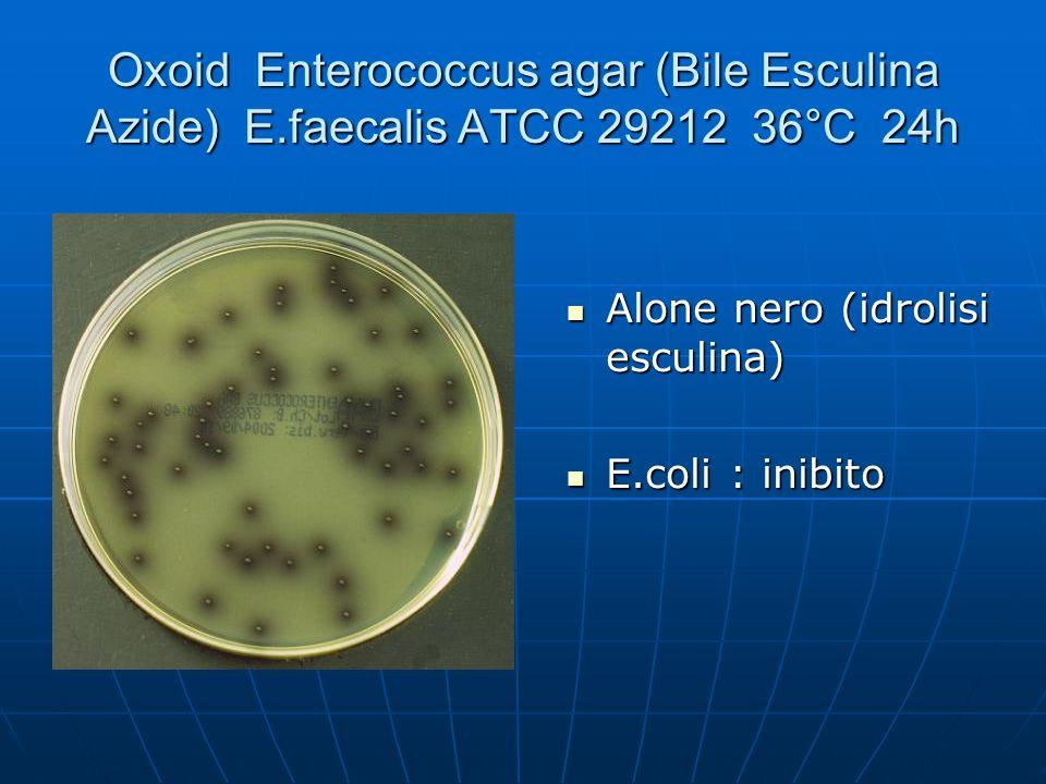 Oxoid Enterococcus agar (Bile Esculina Azide) E