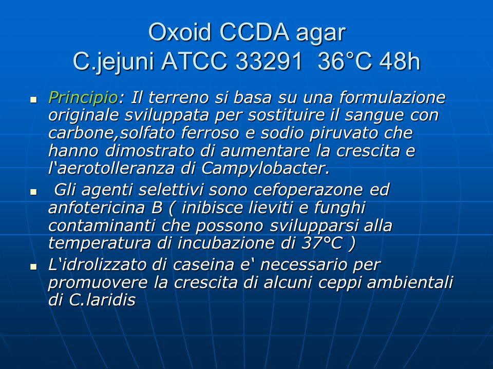 Oxoid CCDA agar C.jejuni ATCC 33291 36°C 48h