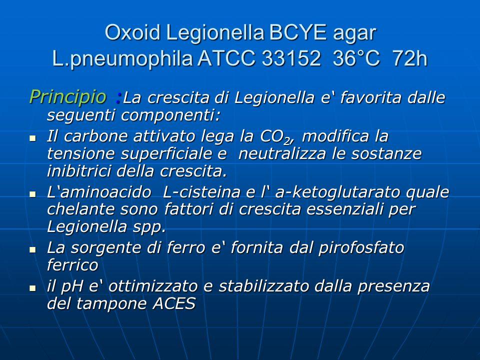 Oxoid Legionella BCYE agar L.pneumophila ATCC 33152 36°C 72h
