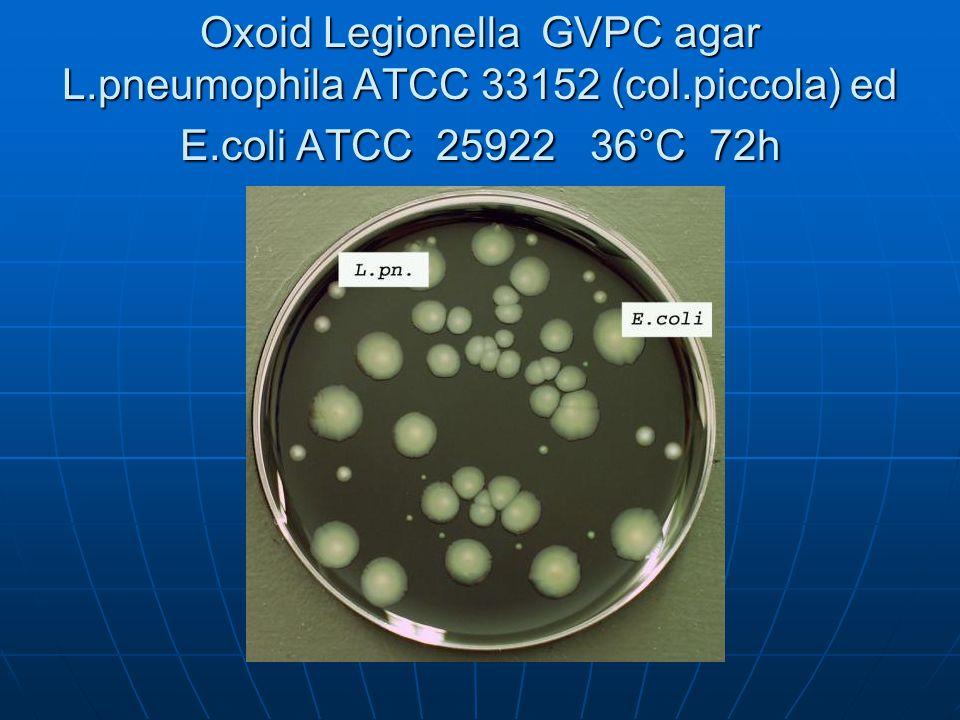 Oxoid Legionella GVPC agar L. pneumophila ATCC 33152 (col