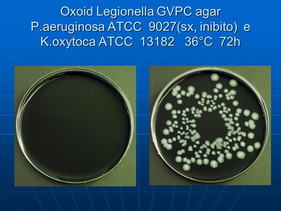 Oxoid Legionella GVPC agar P. aeruginosa ATCC 9027(sx, inibito) e K