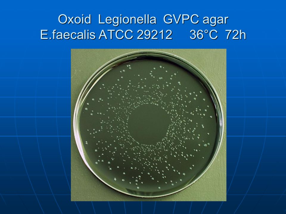 Oxoid Legionella GVPC agar E.faecalis ATCC 29212 36°C 72h