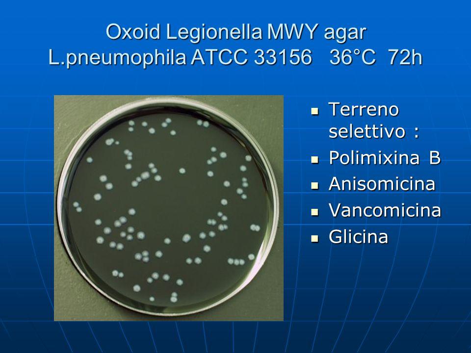 Oxoid Legionella MWY agar L.pneumophila ATCC 33156 36°C 72h