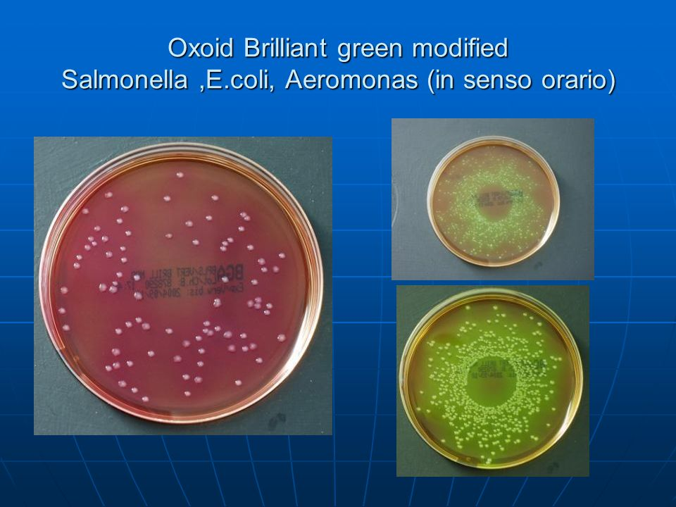 Oxoid Brilliant green modified Salmonella ,E