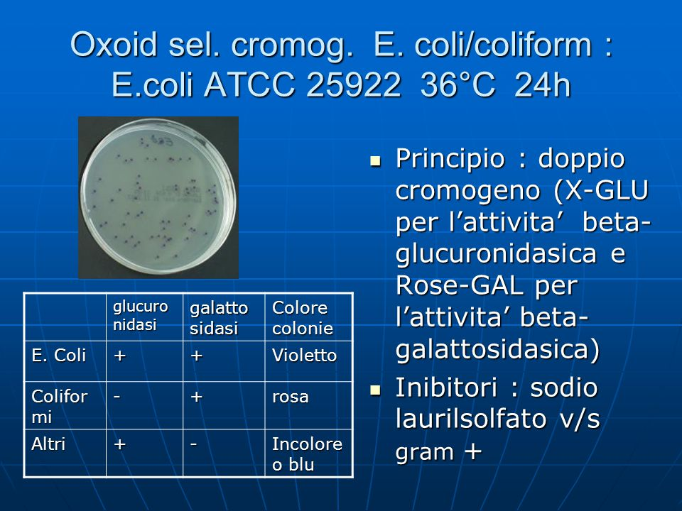 Oxoid sel. cromog. E. coli/coliform : E.coli ATCC 25922 36°C 24h