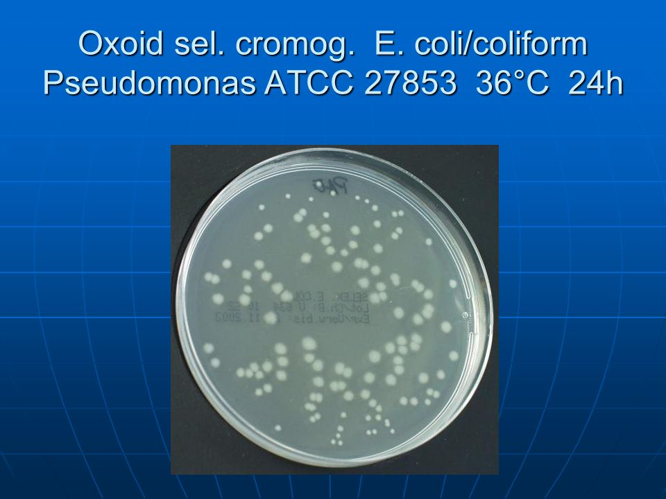 Oxoid sel. cromog. E. coli/coliform Pseudomonas ATCC 27853 36°C 24h