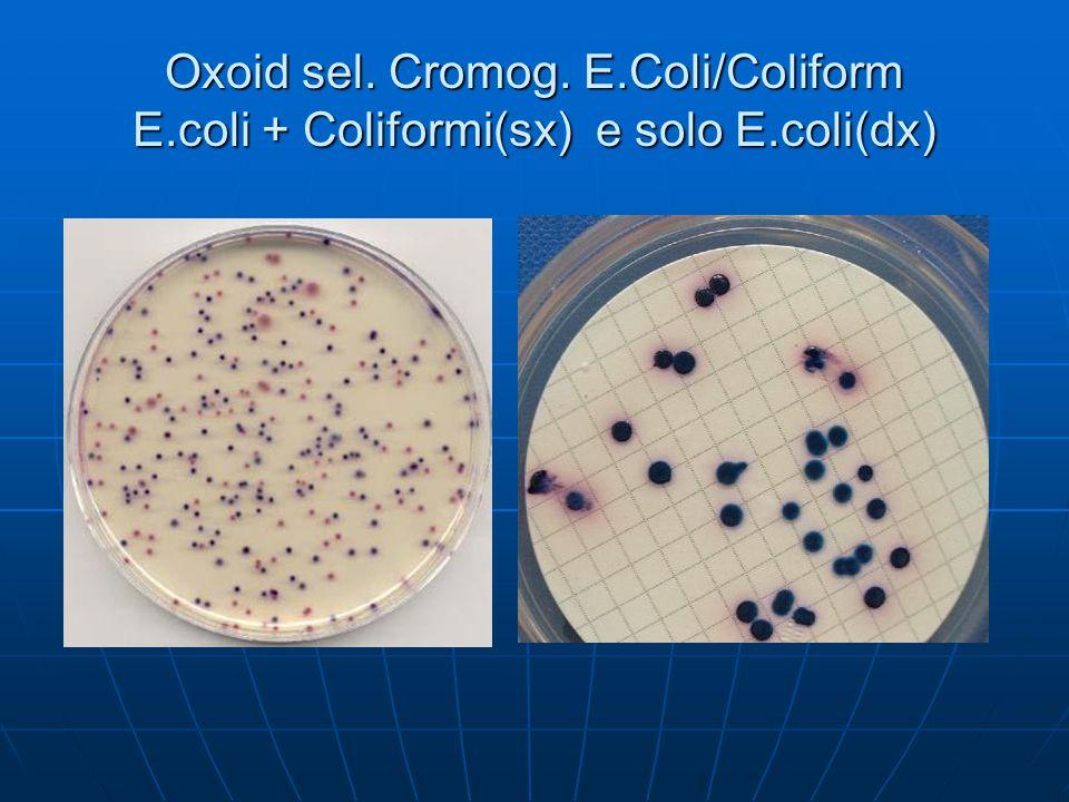 Oxoid sel. Cromog. E. Coli/Coliform E. coli + Coliformi(sx) e solo E
