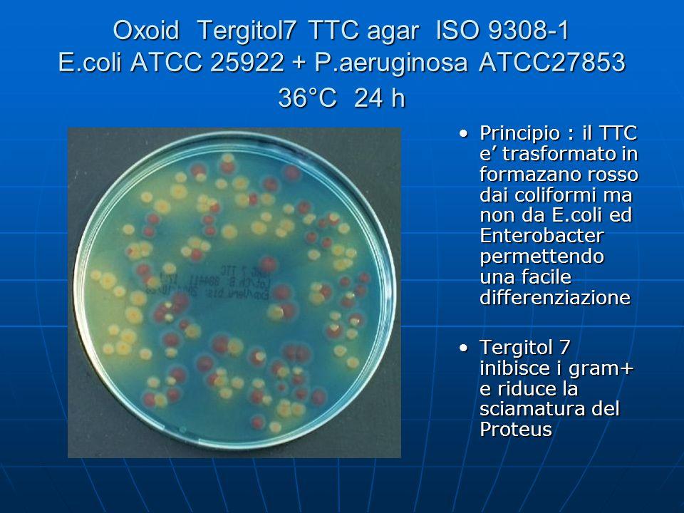 Oxoid Tergitol7 TTC agar ISO 9308-1 E. coli ATCC 25922 + P