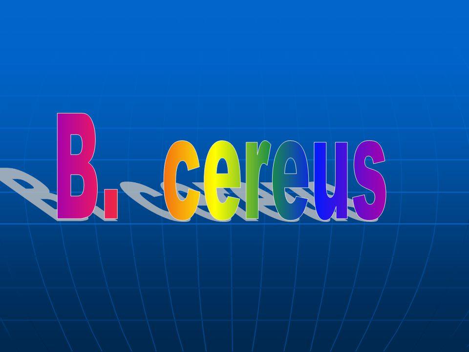 B. cereus