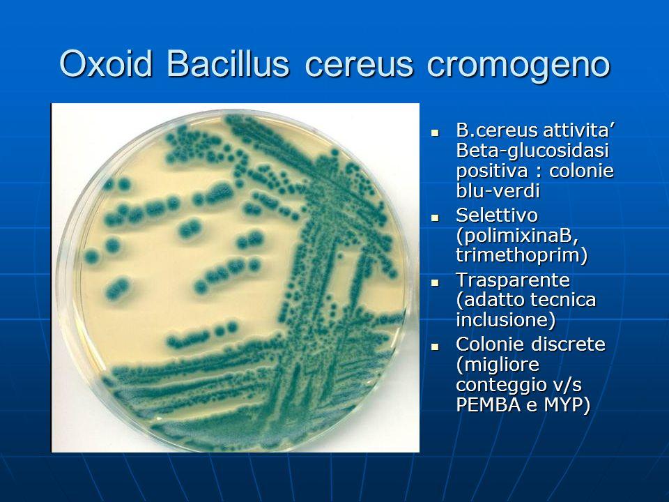 Oxoid Bacillus cereus cromogeno