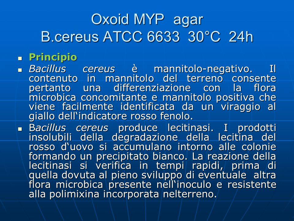Oxoid MYP agar B.cereus ATCC 6633 30°C 24h