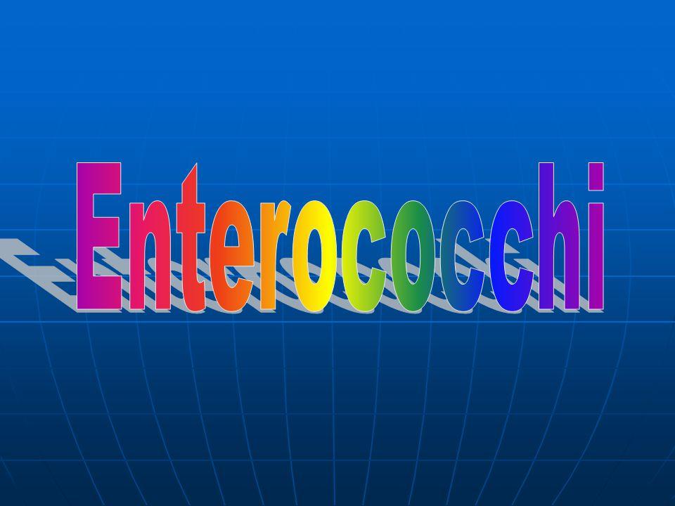 Enterococchi