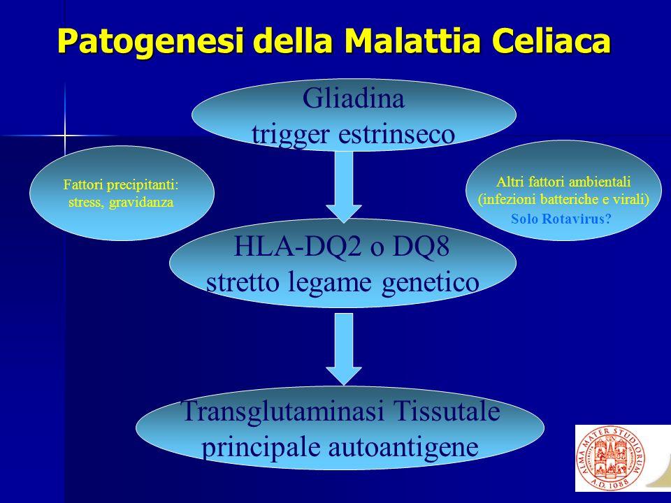 Patogenesi della Malattia Celiaca