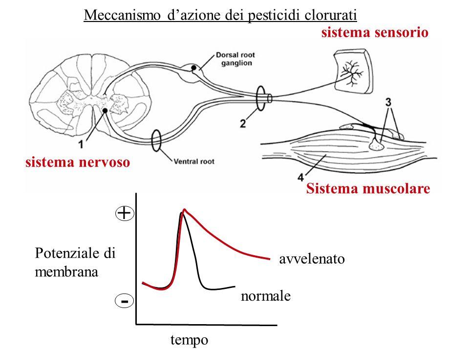 + - Meccanismo d'azione dei pesticidi clorurati sistema sensorio
