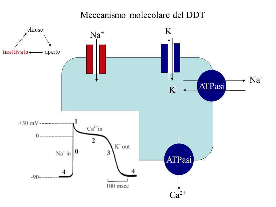 Meccanismo molecolare del DDT
