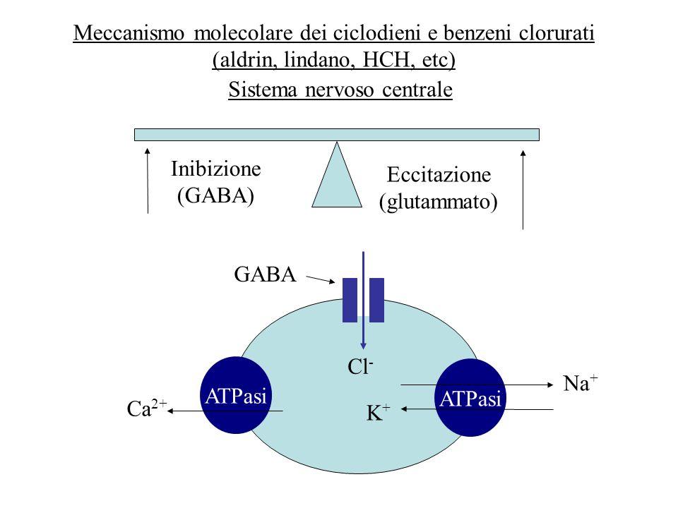 Meccanismo molecolare dei ciclodieni e benzeni clorurati