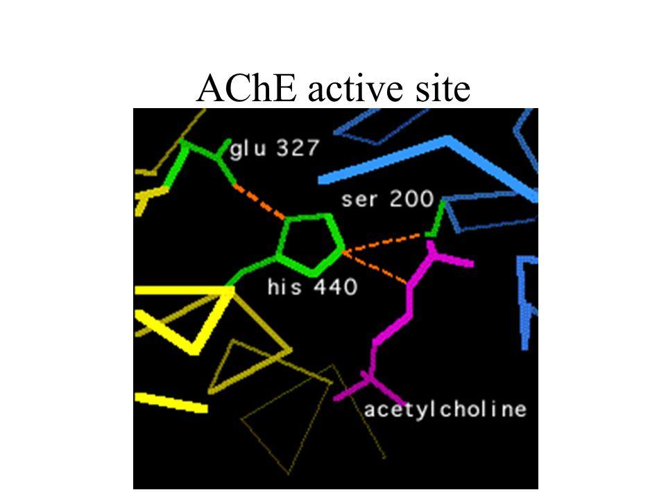 AChE active site