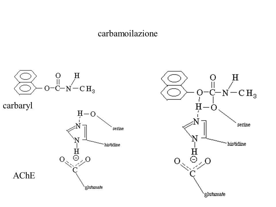 carbamoilazione carbaryl AChE