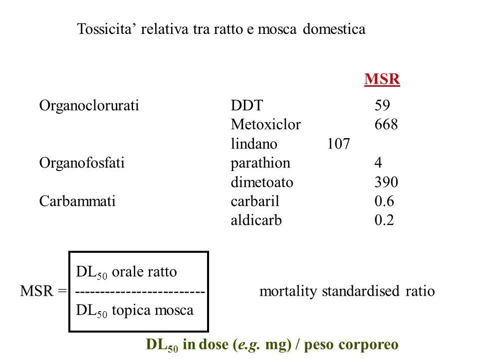 Tossicita' relativa tra ratto e mosca domestica